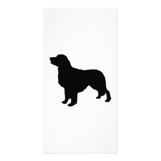 Golden Retriever sporting hunting dog Silhouette Photo Card Template