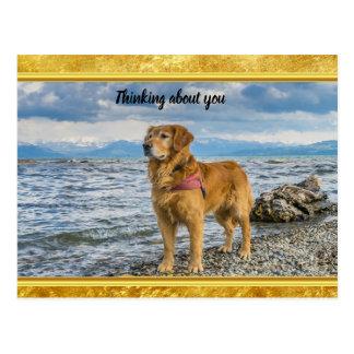 Golden Retriever standing on the blue ocean rocky Postcard