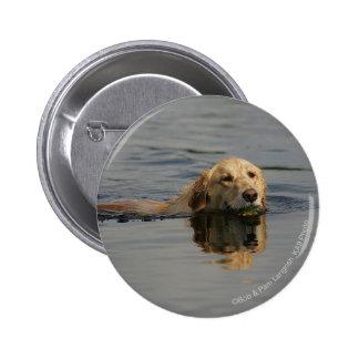 Golden Retriever Swimming 2 Inch Round Button