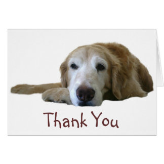 Golden Retriever Thank You Card