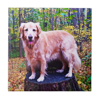 Golden Retriever Tile