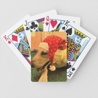 Golden Retriever Wearing Christmas Hat Bicycle Playing Cards