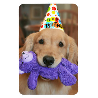 Golden Retriever With Happy Birthday Hat and Toy Magnet