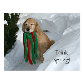Golden Retriever With Toy In Snow Postcard