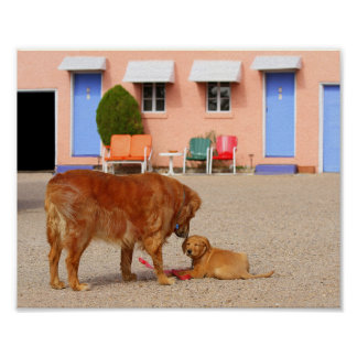 Golden Retrievers at the Blue Swallow Motel Poster