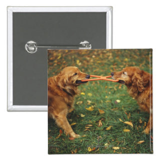 Golden Retrievers playing tug-of-war with toy in 2 Inch Square Button
