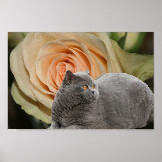 Golden Rose & Cat Poster