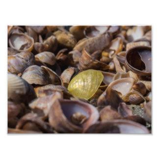 Golden Seashell Photo Print