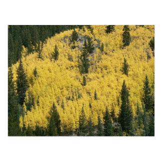 Golden Slope Postcard