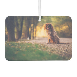 Golden Spaniel dog panting in the sun on path Air Freshener