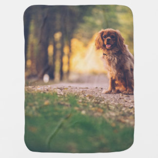 Golden Spaniel dog panting in the sun on path Baby Blanket
