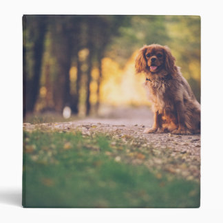 Golden Spaniel dog panting in the sun on path Binder