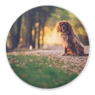Golden Spaniel dog panting in the sun on path Ceramic Knob