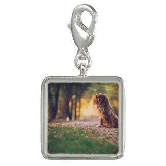 Golden Spaniel dog panting in the sun on path Charm