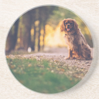 Golden Spaniel dog panting in the sun on path Coaster