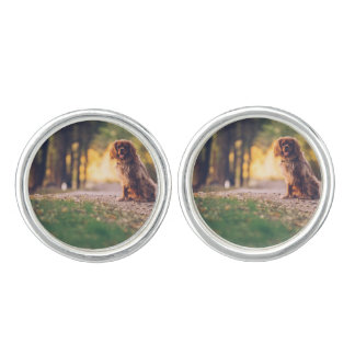 Golden Spaniel dog panting in the sun on path Cufflinks