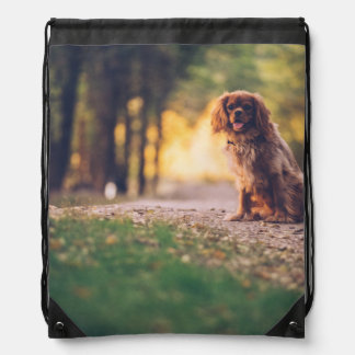 Golden Spaniel dog panting in the sun on path Drawstring Bag