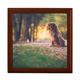 Golden Spaniel dog panting in the sun on path Gift Box