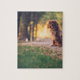 Golden Spaniel dog panting in the sun on path Jigsaw Puzzle