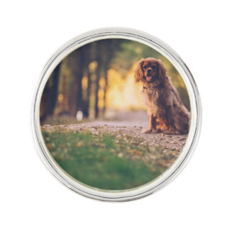 Golden Spaniel dog panting in the sun on path Lapel Pin