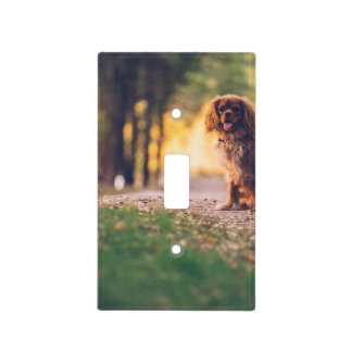 Golden Spaniel dog panting in the sun on path Light Switch Cover