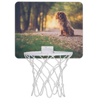 Golden Spaniel dog panting in the sun on path Mini Basketball Hoop