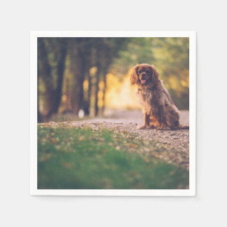 Golden Spaniel dog panting in the sun on path Napkin