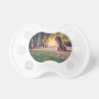 Golden Spaniel dog panting in the sun on path Pacifier