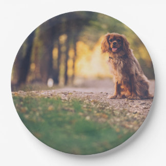 Golden Spaniel dog panting in the sun on path Paper Plate