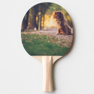 Golden Spaniel dog panting in the sun on path Ping Pong Paddle