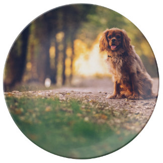 Golden Spaniel dog panting in the sun on path Plate