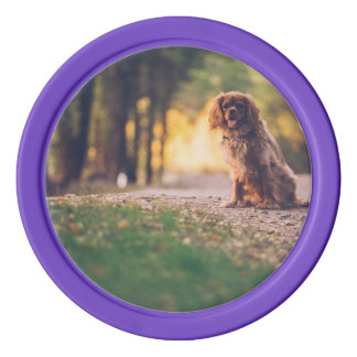 Golden Spaniel dog panting in the sun on path Poker Chips