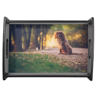 Golden Spaniel dog panting in the sun on path Serving Tray