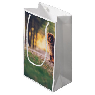Golden Spaniel dog panting in the sun on path Small Gift Bag