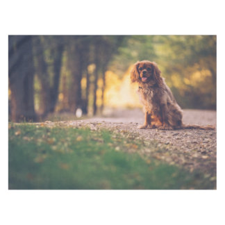 Golden Spaniel dog panting in the sun on path Tablecloth