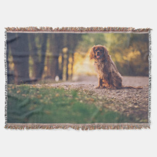 Golden Spaniel dog panting in the sun on path Throw Blanket