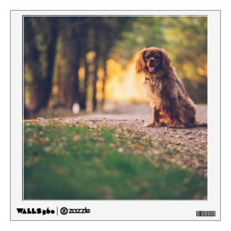Golden Spaniel dog panting in the sun on path Wall Decal