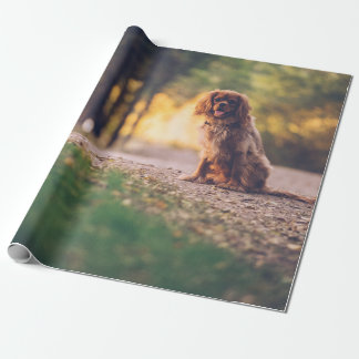 Golden Spaniel dog panting in the sun on path Wrapping Paper