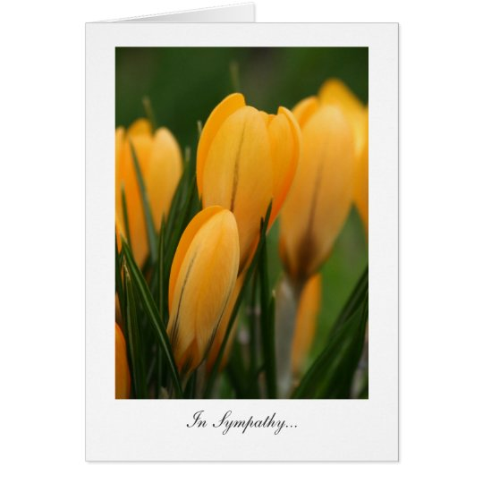 Golden Spring Crocuses - In Sympathy Card