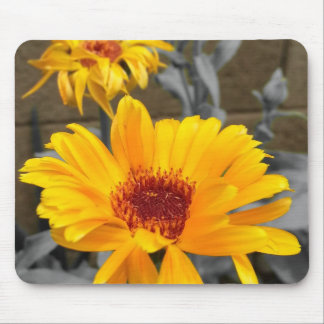 Golden Sunflower Mouse Pad