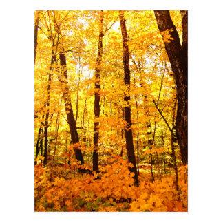 Golden Trees on St Joseph Island Postcard