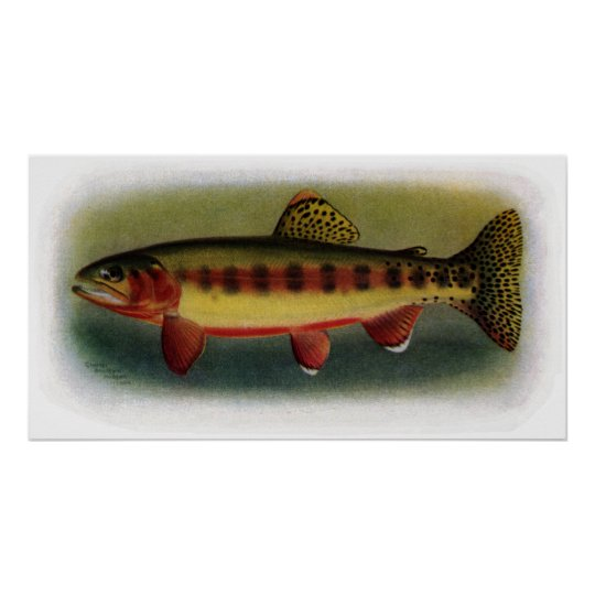 Golden Trout of Volcano Creek Poster