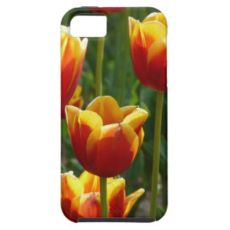 golden tulips iPhone 5 cover