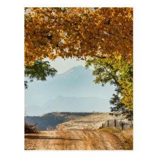Golden Tunnel Of Love Postcard
