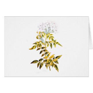 Golden Variegated Jasmine Greeting Card