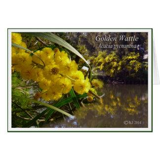 Golden Wattle - Acacia pycnantha Card