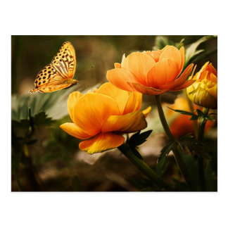 Golden Yellow Butterfly Postcard