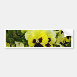 Golden_Yellow_Pansies,_ Bumper Sticker