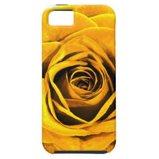 Golden Yellow Rose 20171027b iPhone 5 Case