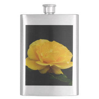 Golden Yellow Rose Isolated on Black Background Hip Flask
